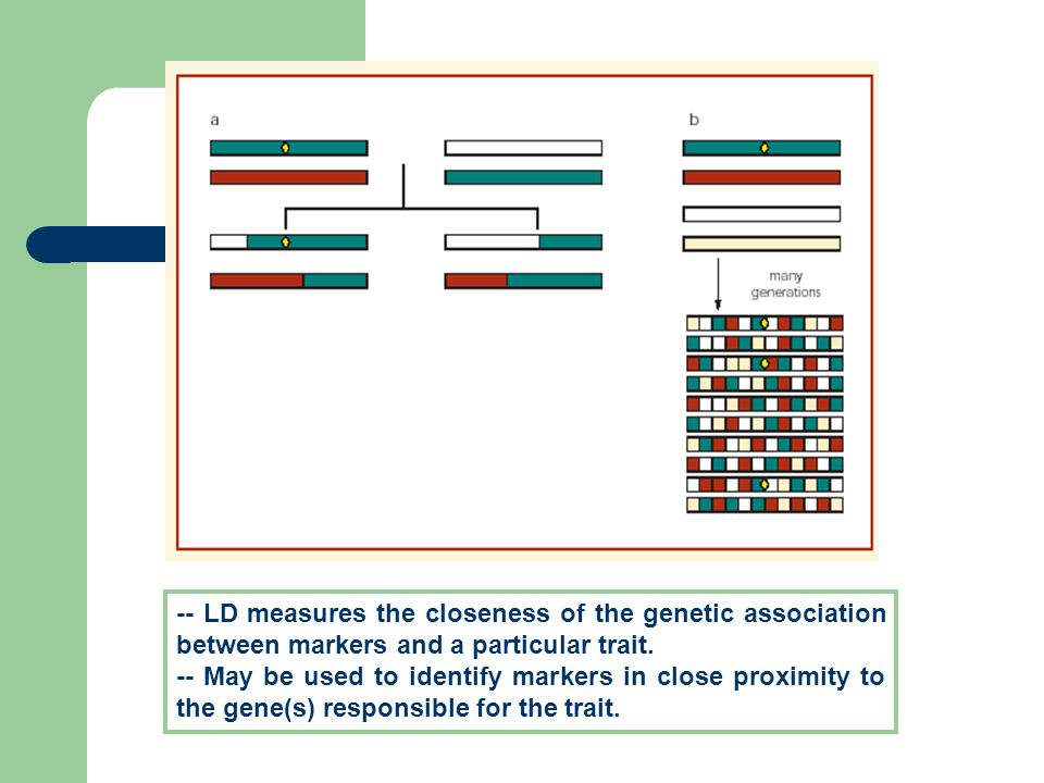 -- LD measures the closeness of the genetic association between markers and a particular trait. -- May be used to identify markers in close proximity