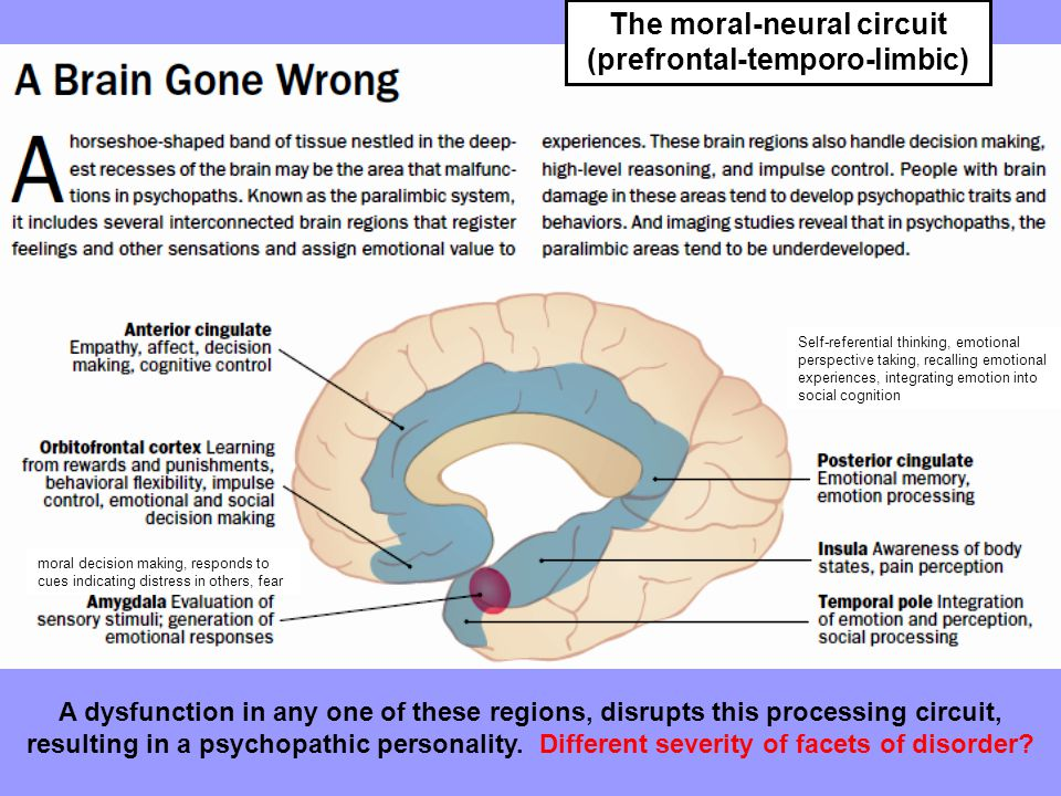 The moral-neural circuit (prefrontal-temporo-limbic) moral decision making, responds to cues indicating distress in others, fear Self-referential thinking, emotional perspective taking, recalling emotional experiences, integrating emotion into social cognition A dysfunction in any one of these regions, disrupts this processing circuit, resulting in a psychopathic personality.