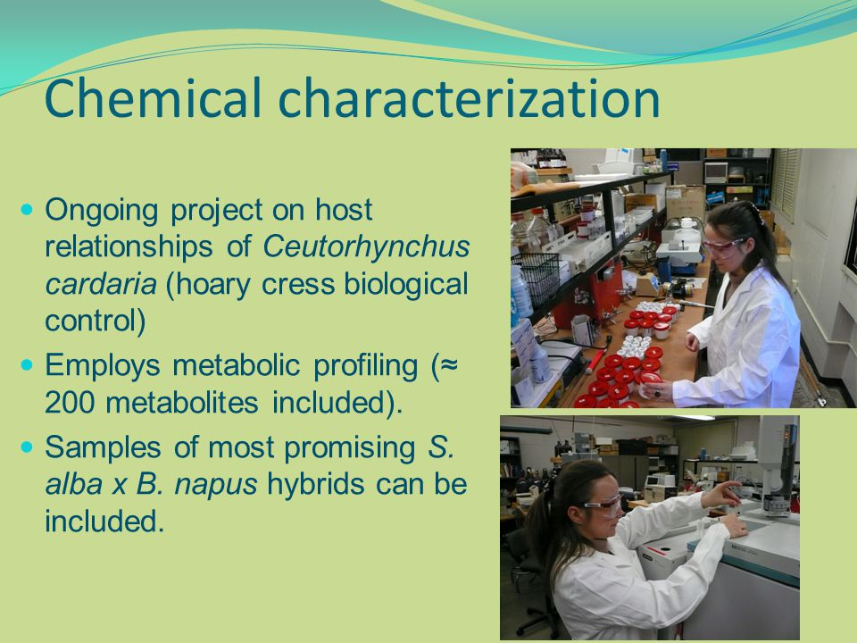 Chemical characterization Ongoing project on host relationships of Ceutorhynchus cardaria (hoary cress biological control) Employs metabolic profiling (≈ 200 metabolites included).