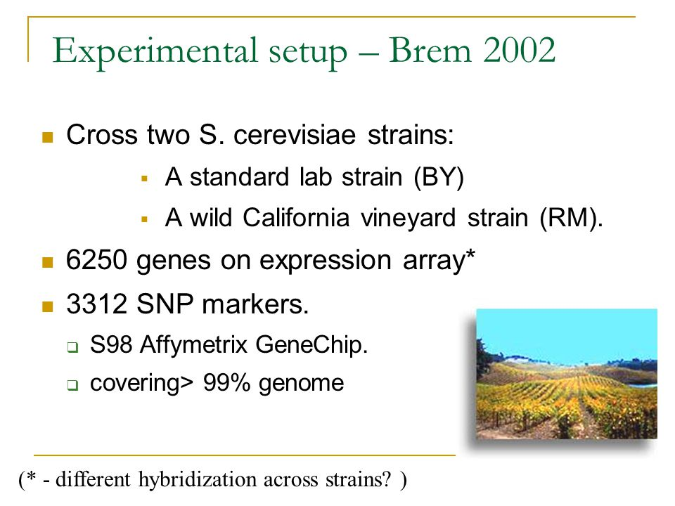 Experimental setup – Brem 2002 (* - different hybridization across strains? ) Cross two S. cerevisiae strains:  A standard lab strain (BY)  A wild C