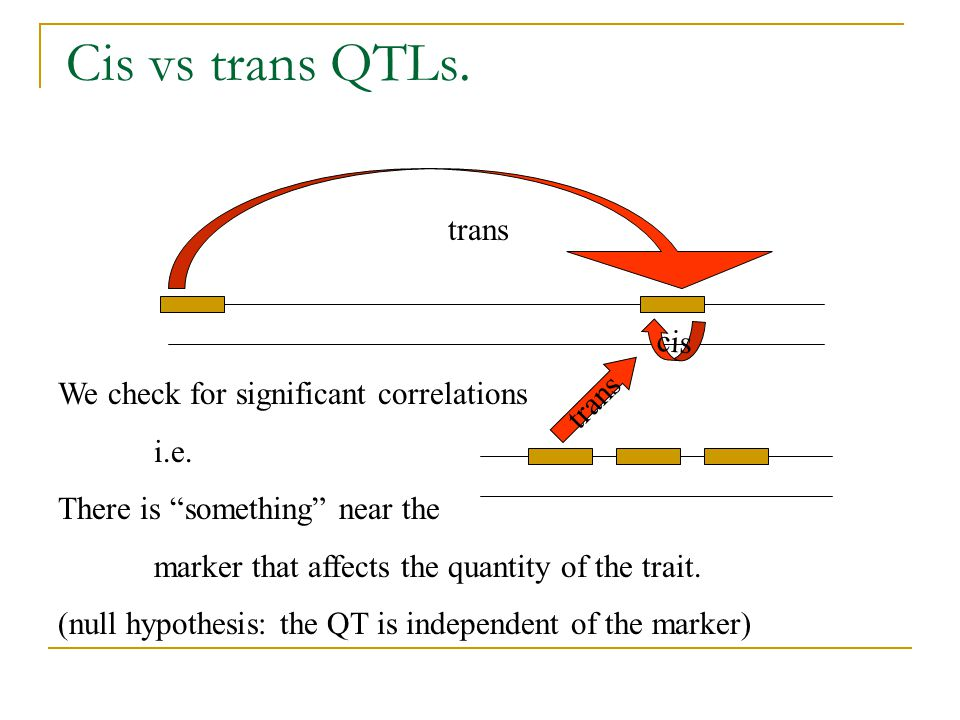 "Cis vs trans QTLs. cis trans We check for significant correlations i.e. There is ""something"" near the marker that affects the quantity of the trait. ("