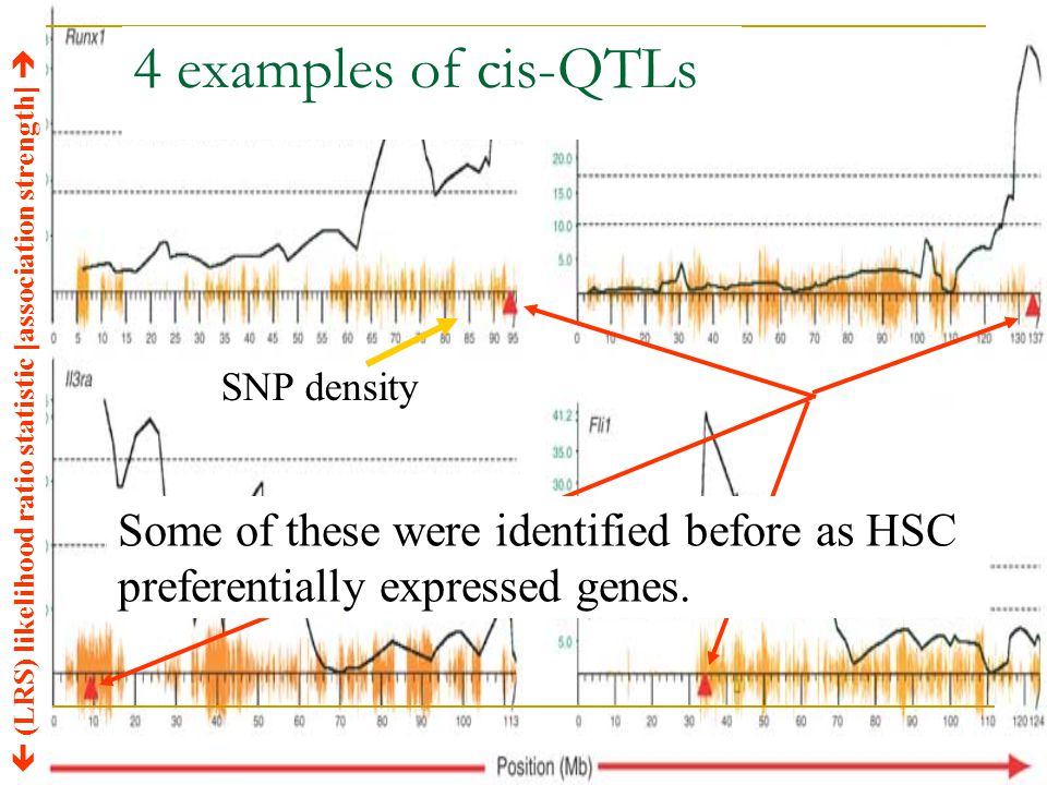 4 examples of cis-QTLs  (LRS) likelihood ratio statistic [association strength]  SNP density Some of these were identified before as HSC preferentia