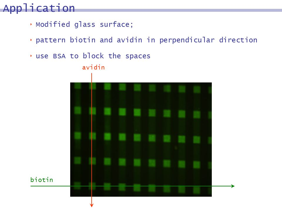  Modified glass surface;  pattern biotin and avidin in perpendicular direction  use BSA to block the spaces avidin biotin Application