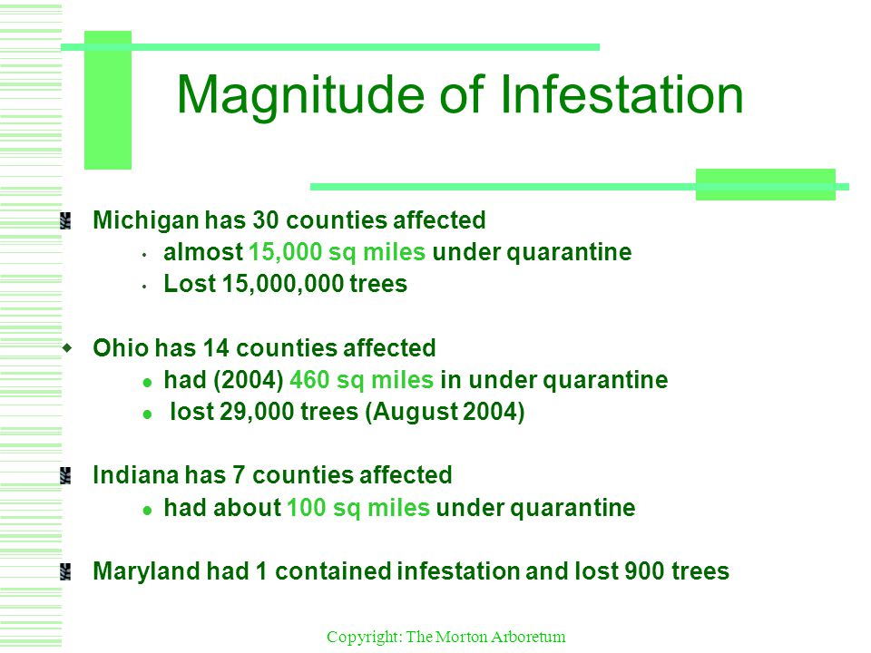 Copyright: The Morton Arboretum Magnitude of Infestation Michigan has 30 counties affected almost 15,000 sq miles under quarantine Lost 15,000,000 trees  Ohio has 14 counties affected had (2004) 460 sq miles in under quarantine lost 29,000 trees (August 2004) Indiana has 7 counties affected had about 100 sq miles under quarantine Maryland had 1 contained infestation and lost 900 trees