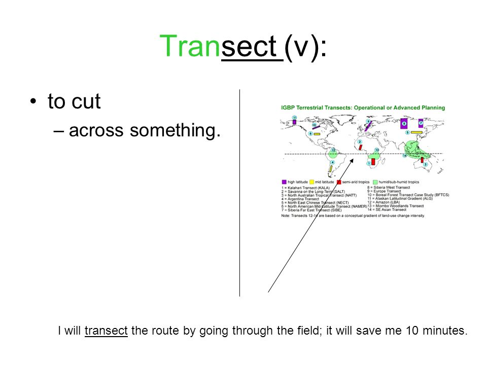 Transect (v): to cut –across something.