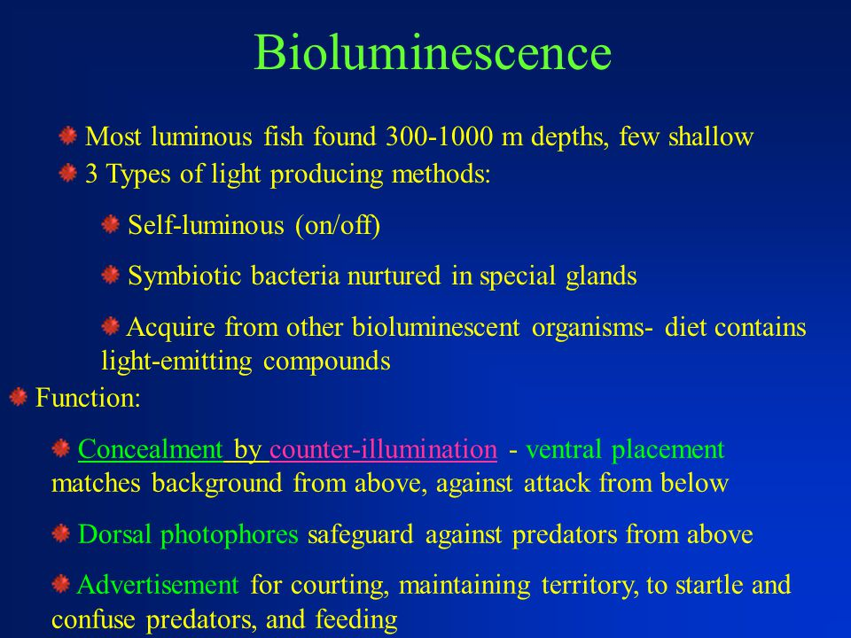 Bioluminescence Most luminous fish found 300-1000 m depths, few shallow 3 Types of light producing methods: Self-luminous (on/off) Symbiotic bacteria nurtured in special glands Acquire from other bioluminescent organisms- diet contains light-emitting compounds Function: Concealment by counter-illumination - ventral placement matches background from above, against attack from below Dorsal photophores safeguard against predators from above Advertisement for courting, maintaining territory, to startle and confuse predators, and feeding