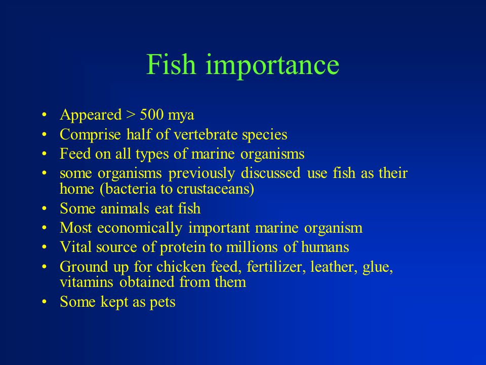 Fish importance Appeared > 500 mya Comprise half of vertebrate species Feed on all types of marine organisms some organisms previously discussed use f