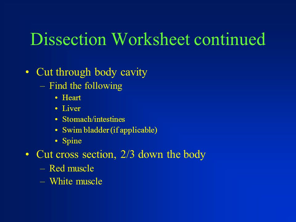 Dissection Worksheet continued Cut through body cavity –Find the following Heart Liver Stomach/intestines Swim bladder (if applicable) Spine Cut cross