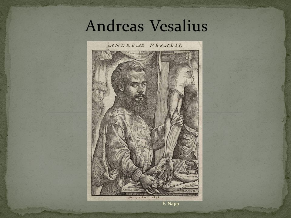 Vesalius was determined to learn by first-hand investigation and observation.
