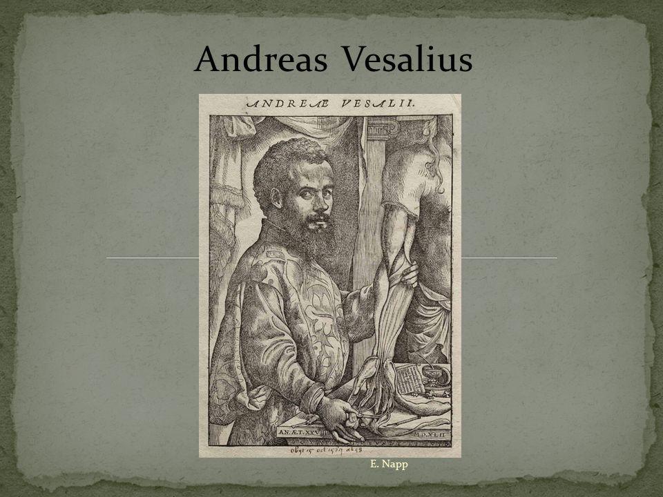 Andreas Vesalius E. Napp