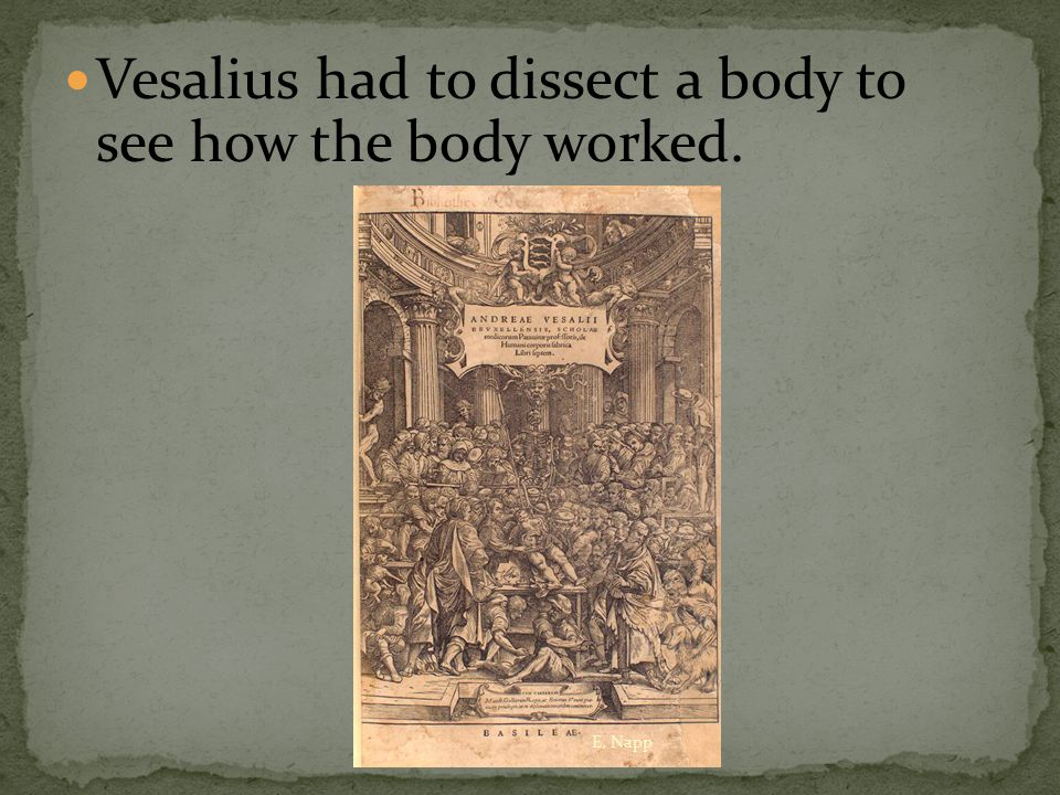 Vesalius had to dissect a body to see how the body worked. E. Napp