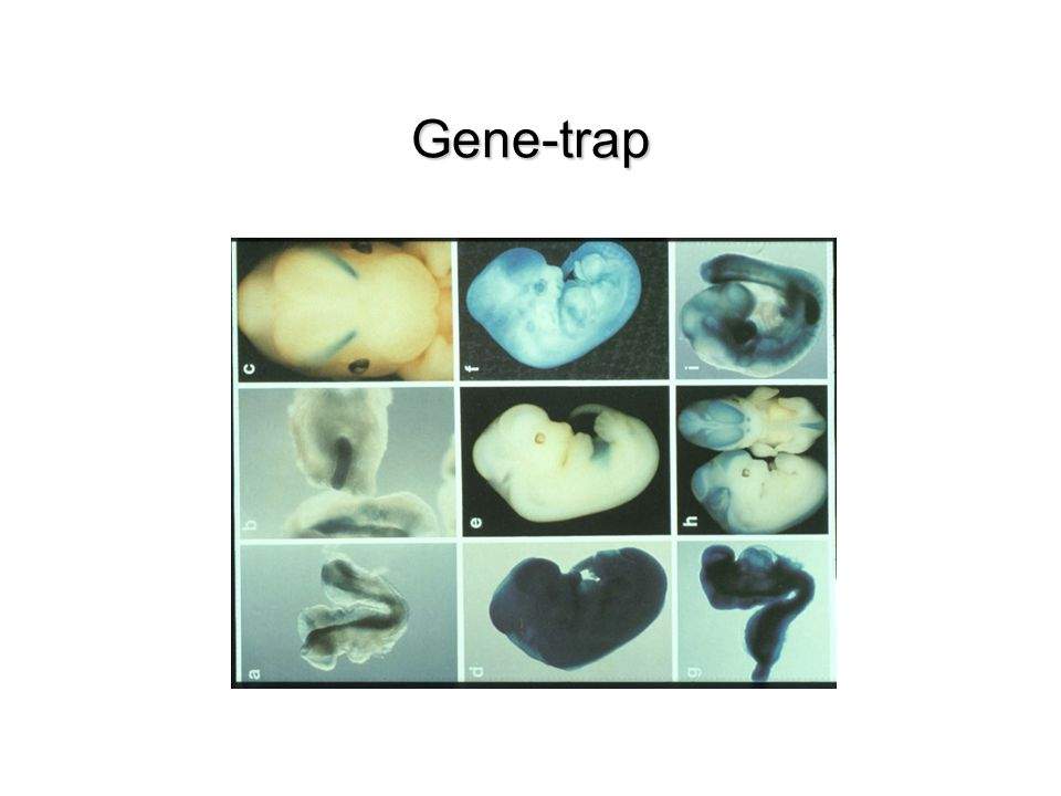 Gene-trap