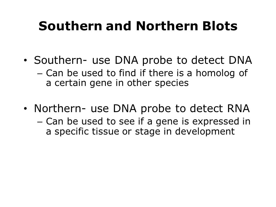 Southern and Northern Blots Southern- use DNA probe to detect DNA – Can be used to find if there is a homolog of a certain gene in other species North