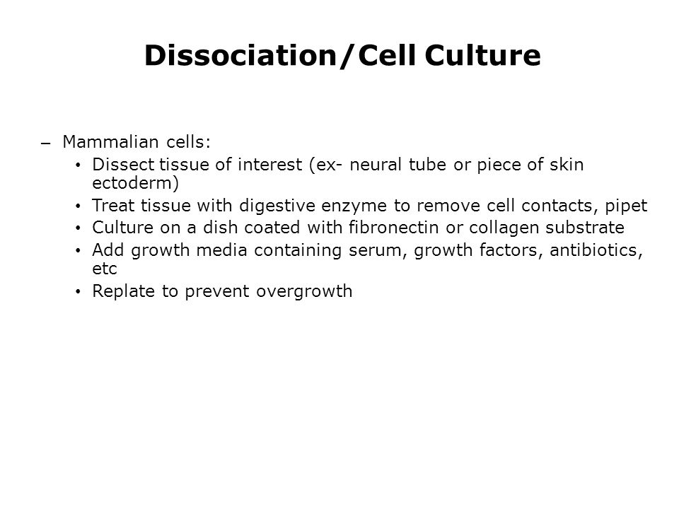 Dissociation/Cell Culture – Mammalian cells: Dissect tissue of interest (ex- neural tube or piece of skin ectoderm) Treat tissue with digestive enzyme