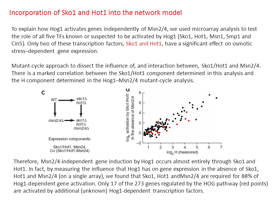 Incorporation of Sko1 and Hot1 into the network model To explain how Hog1 activates genes independently of Msn2/4, we used microarray analysis to test the role of all five TFs known or suspected to be activated by Hog1 (Sko1, Hot1, Msn1, Smp1 and Cin5).