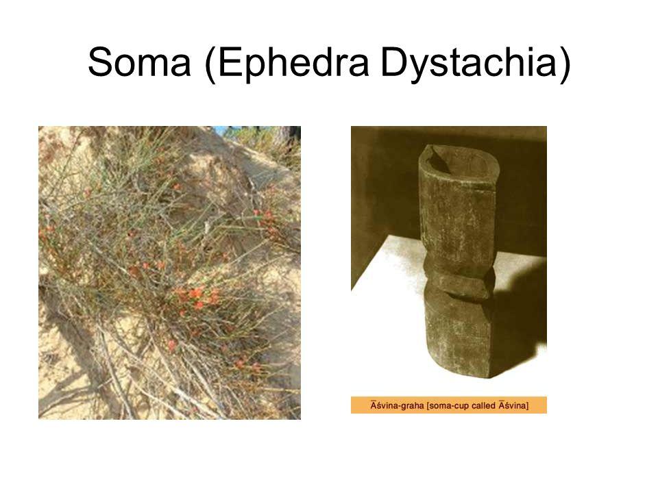 Soma (Ephedra Dystachia)