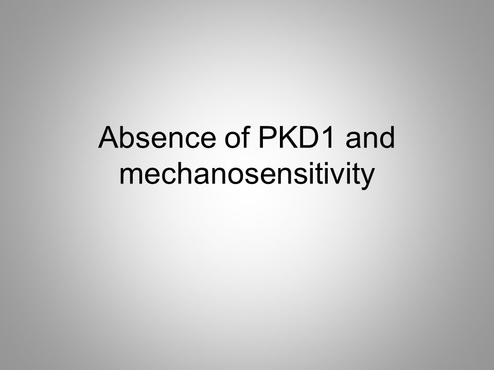 Absence of PKD1 and mechanosensitivity