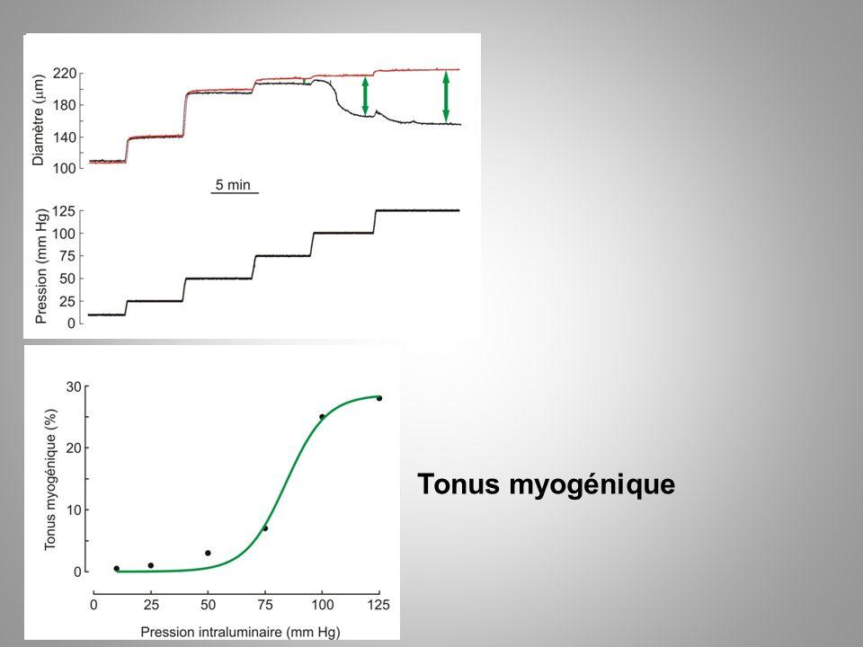 Tonus myogénique
