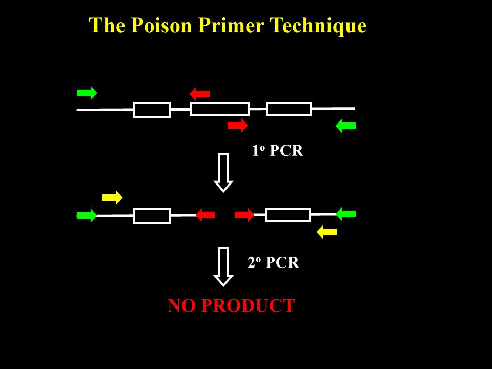 The Poison Primer Technique 1 o PCR 2 o PCR NO PRODUCT