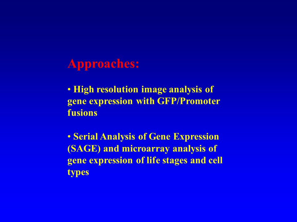 Approaches: High resolution image analysis of gene expression with GFP/Promoter fusions Serial Analysis of Gene Expression (SAGE) and microarray analysis of gene expression of life stages and cell types