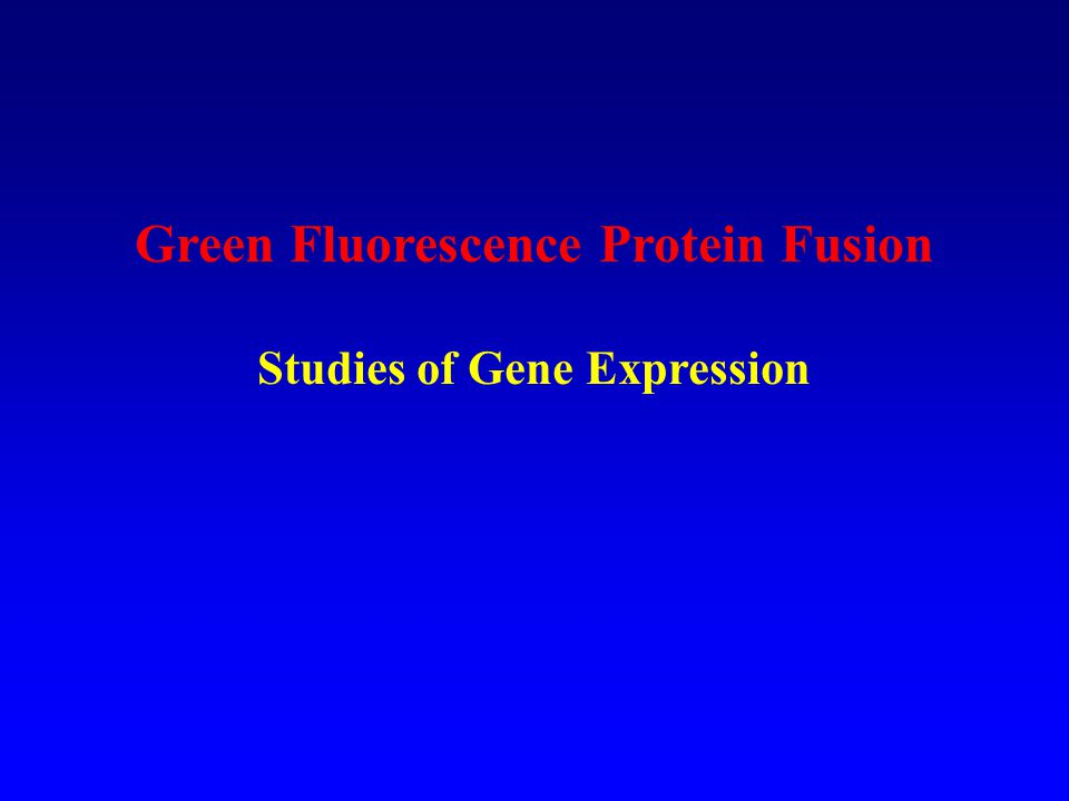 Green Fluorescence Protein Fusion Studies of Gene Expression