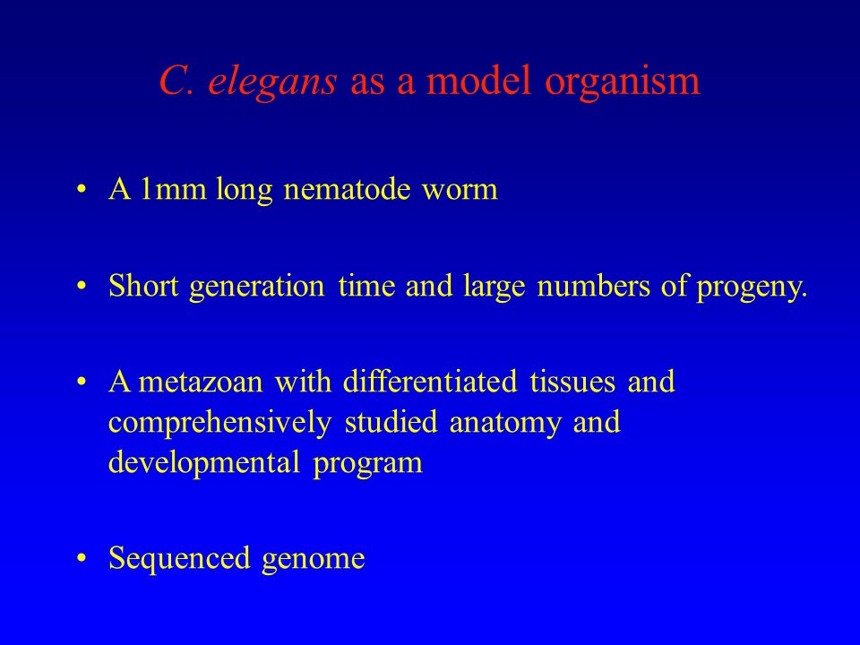 C. elegans as a model organism A 1mm long nematode worm Short generation time and large numbers of progeny. A metazoan with differentiated tissues and