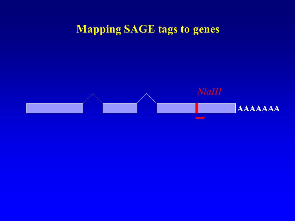 Mapping SAGE tags to genes AAAAAAA NlaIII