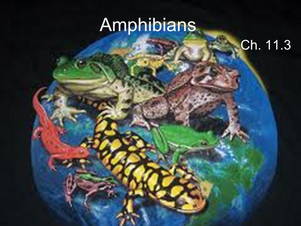 Amphibians Ch. 11.3