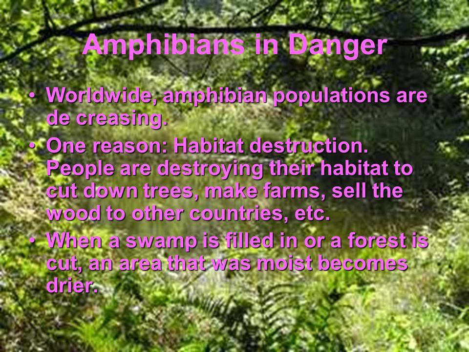 Amphibians in Danger Worldwide, amphibian populations are de creasing.Worldwide, amphibian populations are de creasing.