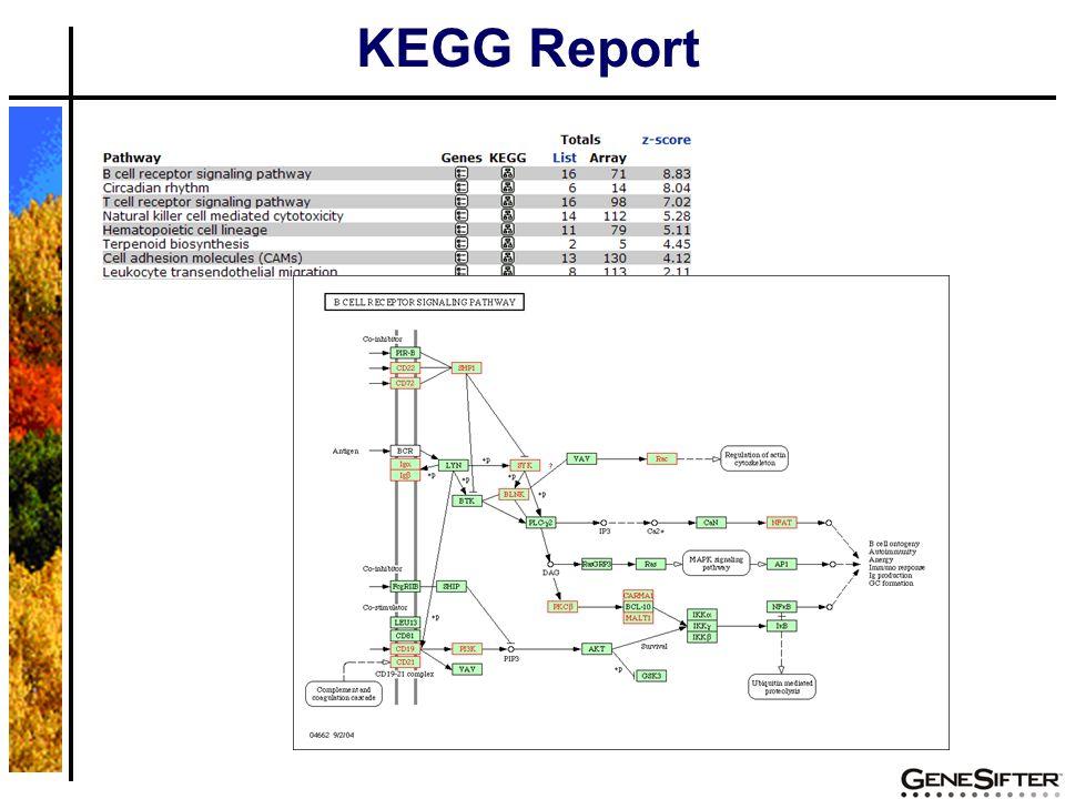 KEGG Report