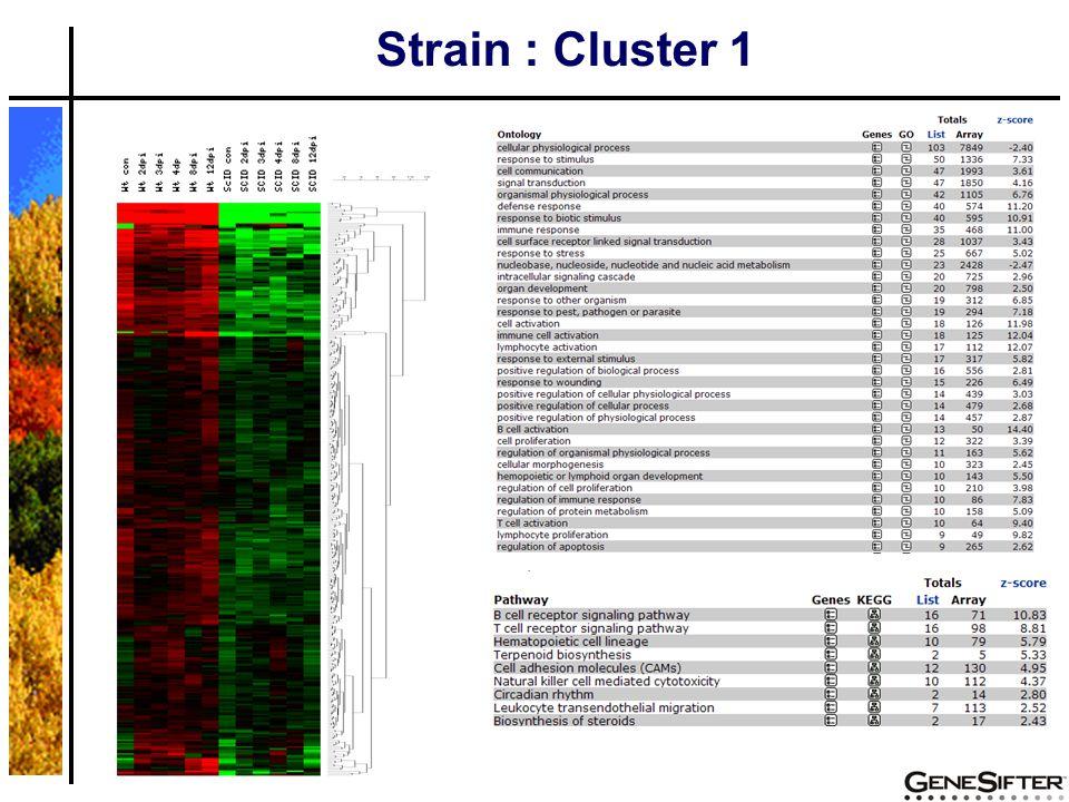Strain : Cluster 1