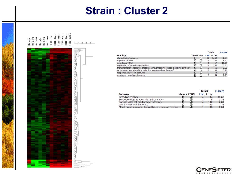 Strain : Cluster 2