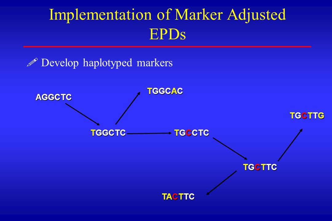 ! !Develop haplotyped markers Implementation of Marker Adjusted EPDs AGGCTC TGGCTC TGCCTC TGCTTC TGGCAC TACTTC TGCTTGTGCTTGTGCTTGTGCTTG
