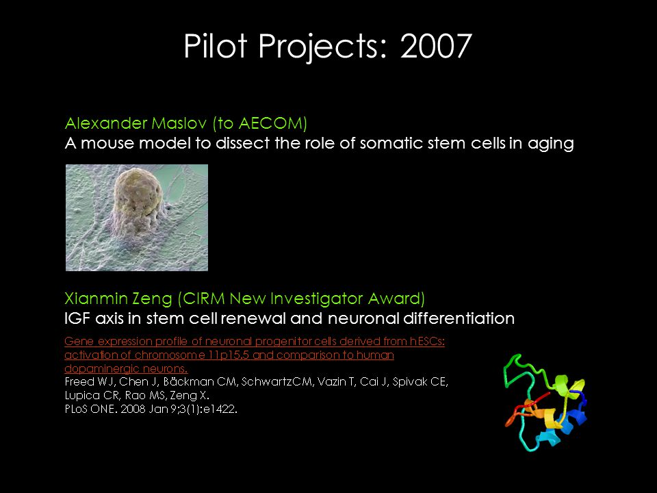 Pilot Projects: 2007 Alexander Maslov (to AECOM) A mouse model to dissect the role of somatic stem cells in aging Xianmin Zeng (CIRM New Investigator Award) IGF axis in stem cell renewal and neuronal differentiation