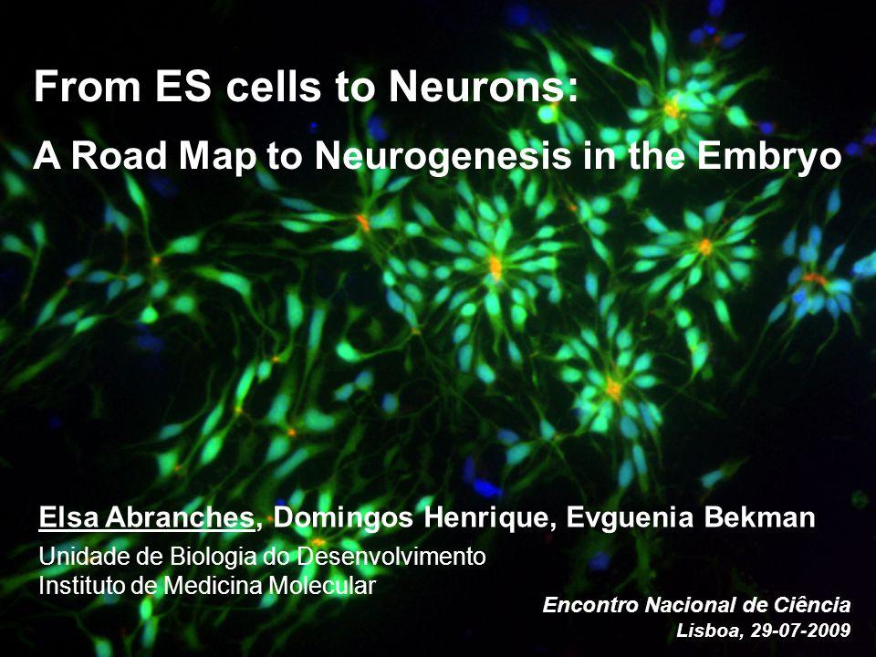 From ES cells to Neurons: A Road Map to Neurogenesis in the Embryo Elsa Abranches, Domingos Henrique, Evguenia Bekman Unidade de Biologia do Desenvolvimento Instituto de Medicina Molecular Encontro Nacional de Ciência Lisboa, 29-07-2009