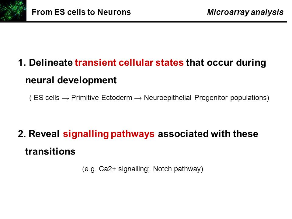 1. Delineate transient cellular states that occur during neural development ( ES cells  Primitive Ectoderm  Neuroepithelial Progenitor populations)