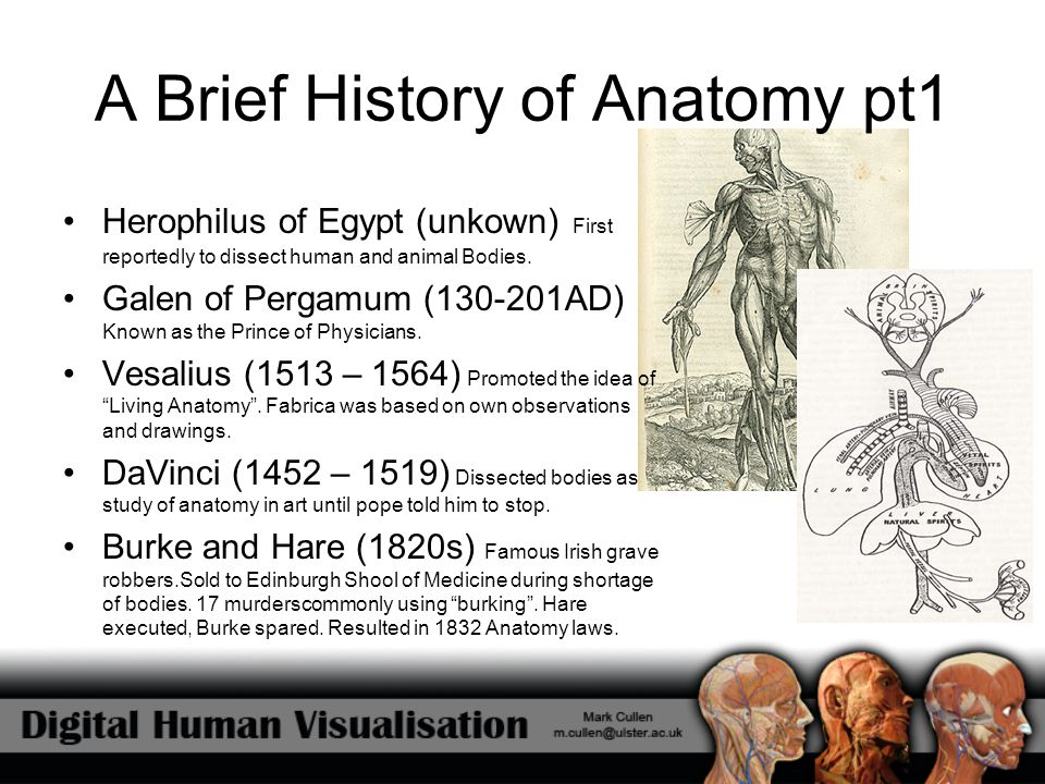 A Brief History of Anatomy pt2 Grey's Anatomy (1858) Arguably the mst famous anatomical reference in medical history to date.