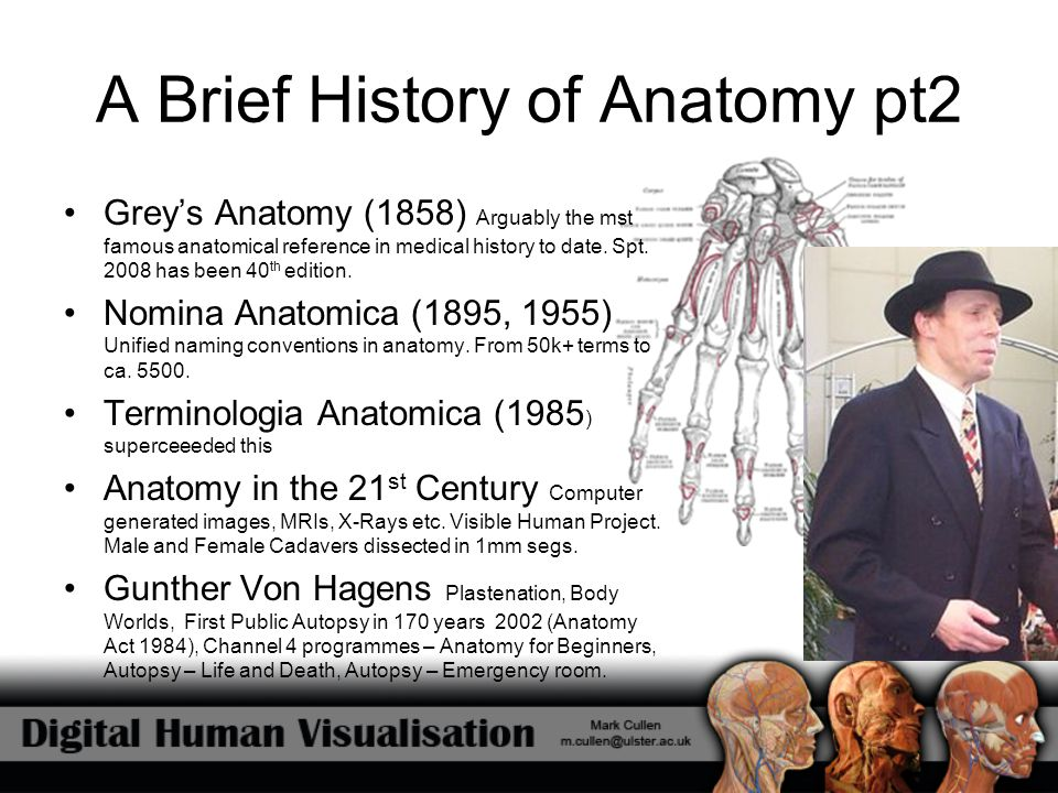 Current 3d Human Visualisation Examples of Applications and Model Solutions Visible Body (Argosy Publishing 2007) Primal Pictures Anatomy TV (Primal Pictures 2006) Visible Human Project (Ongoing)