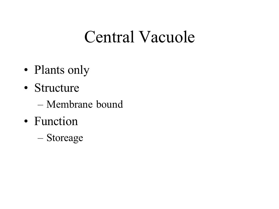Central Vacuole Plants only Structure –Membrane bound Function –Storeage