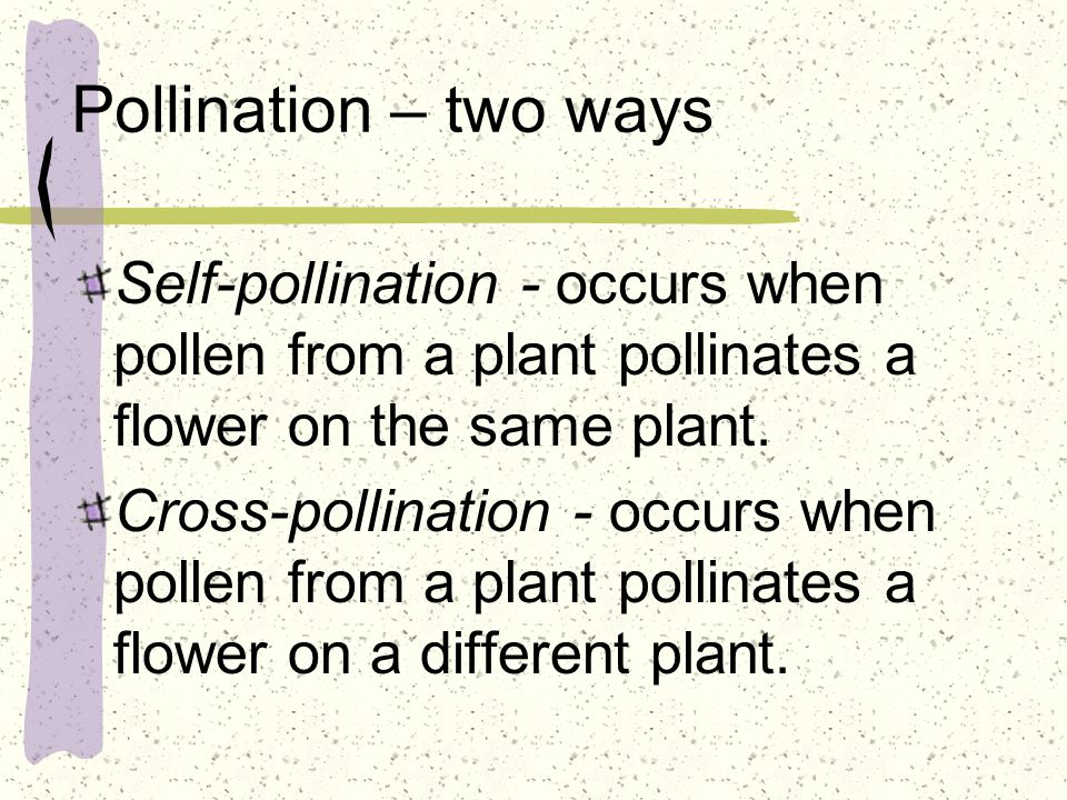 Pollination – two ways Self-pollination - occurs when pollen from a plant pollinates a flower on the same plant. Cross-pollination - occurs when polle