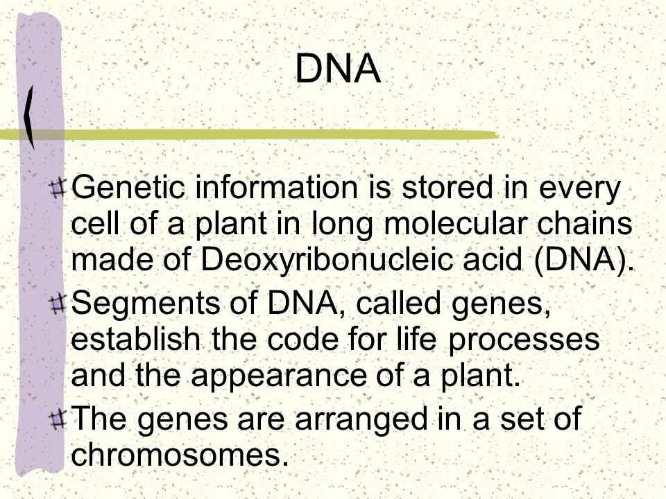DNA Genetic information is stored in every cell of a plant in long molecular chains made of Deoxyribonucleic acid (DNA). Segments of DNA, called genes
