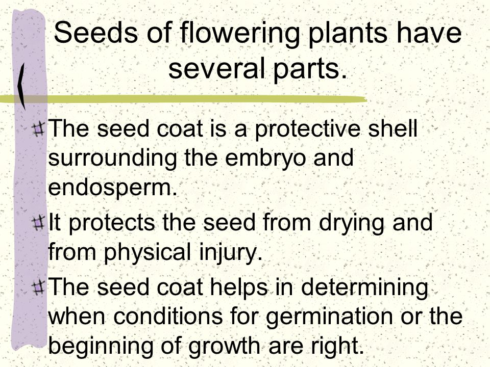 Seeds of flowering plants have several parts. The seed coat is a protective shell surrounding the embryo and endosperm. It protects the seed from dryi