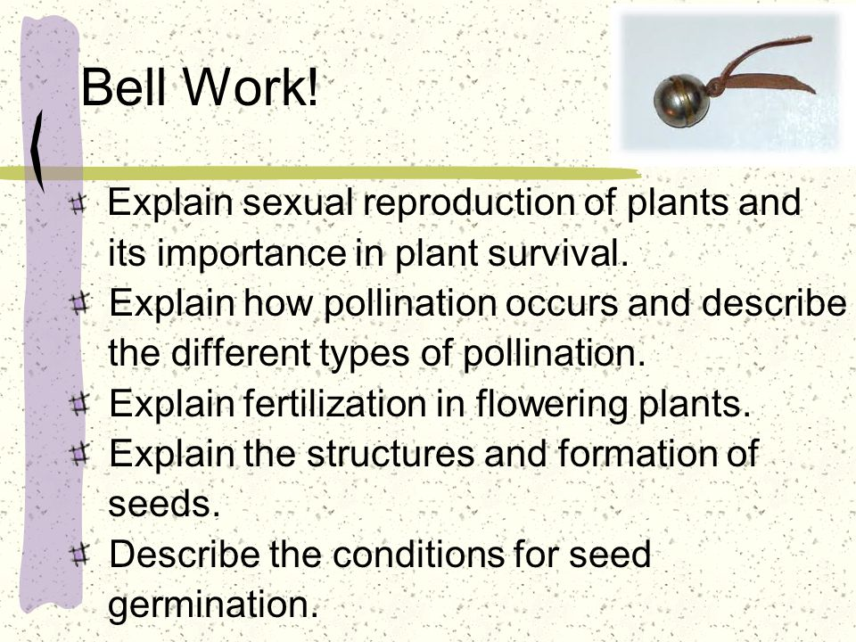 What is the structure of seeds and how are they formed.
