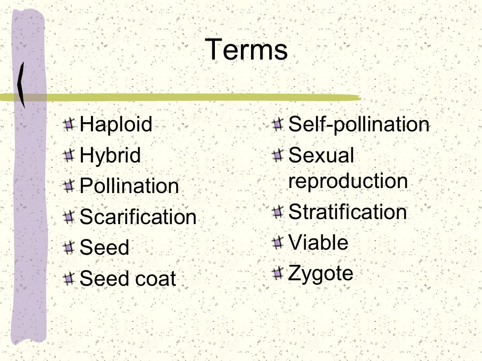 Germination process The germination process begins with the absorption of water.