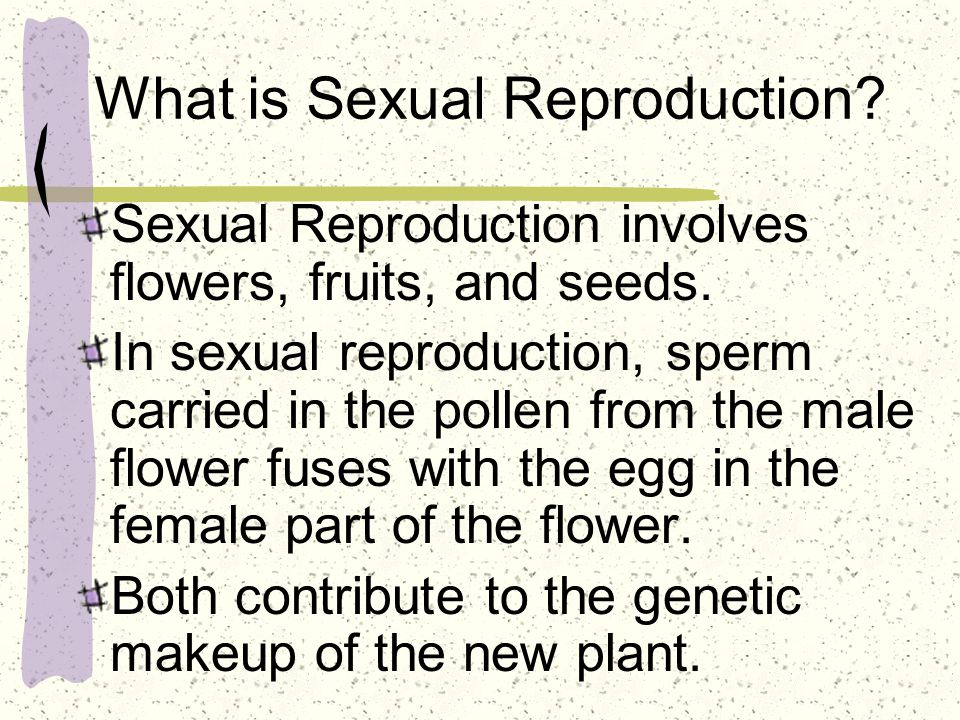 What is Sexual Reproduction? Sexual Reproduction involves flowers, fruits, and seeds. In sexual reproduction, sperm carried in the pollen from the mal