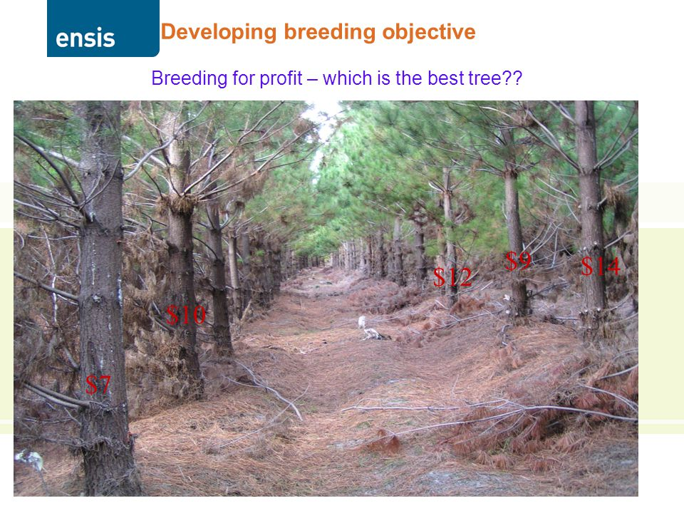 THE JOINT FORCES OF CSIRO & SCION Developing breeding objective Breeding for profit – which is the best tree?.