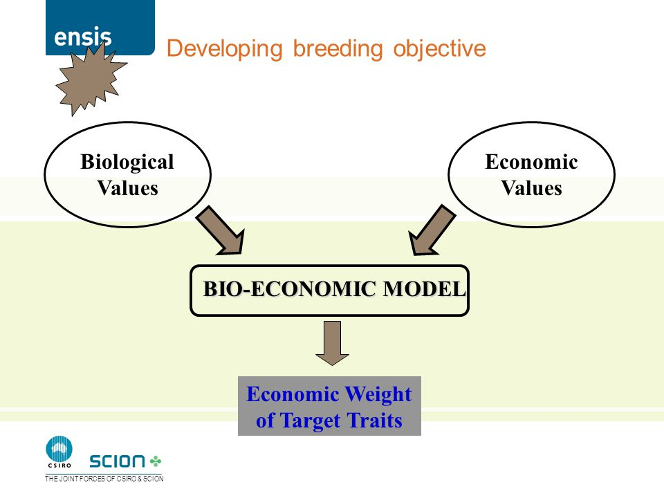 THE JOINT FORCES OF CSIRO & SCION Developing breeding objective Biological Values Economic Values BIO-ECONOMIC MODEL Economic Weight of Target Traits