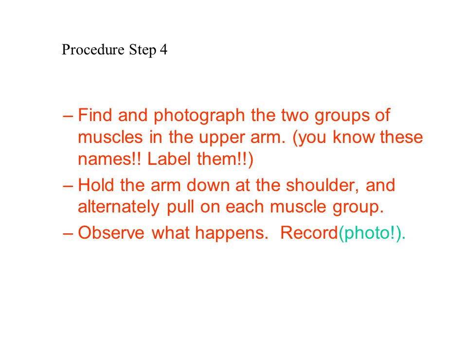 Procedure Step 4 –Find and photograph the two groups of muscles in the upper arm. (you know these names!! Label them!!) –Hold the arm down at the shou