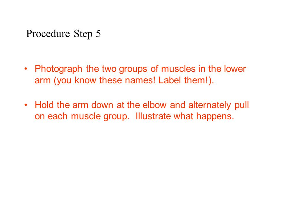 Procedure Step 5 Photograph the two groups of muscles in the lower arm (you know these names! Label them!). Hold the arm down at the elbow and alterna
