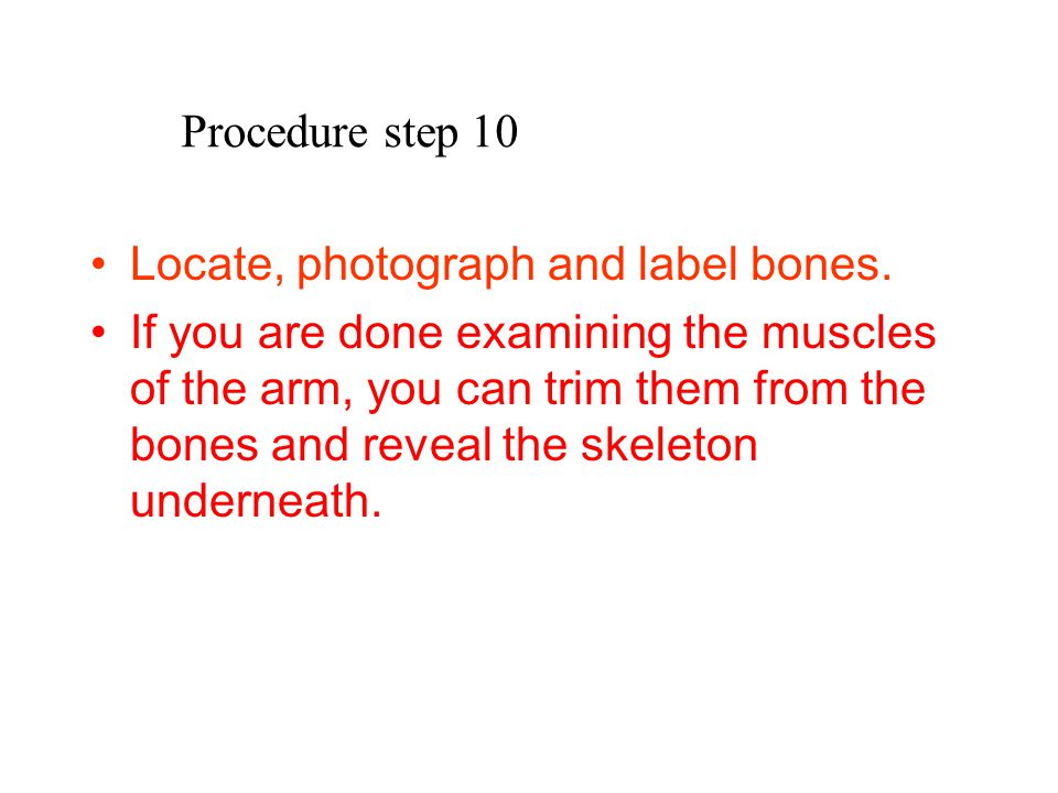 Procedure step 10 Locate, photograph and label bones. If you are done examining the muscles of the arm, you can trim them from the bones and reveal th